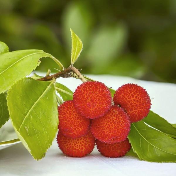 westlicher erdbeerbaum arbutus unedo immergr n ca 40 60. Black Bedroom Furniture Sets. Home Design Ideas