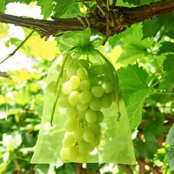 Trauben Schutzbeutel Frucht Schutz gegen Fraß von Insekten und Vögeln, 25 Beutel pro Pack
