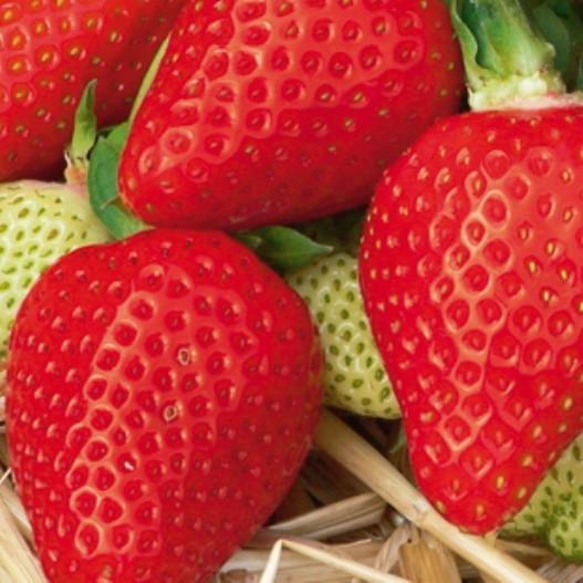 Erdbeere Asia