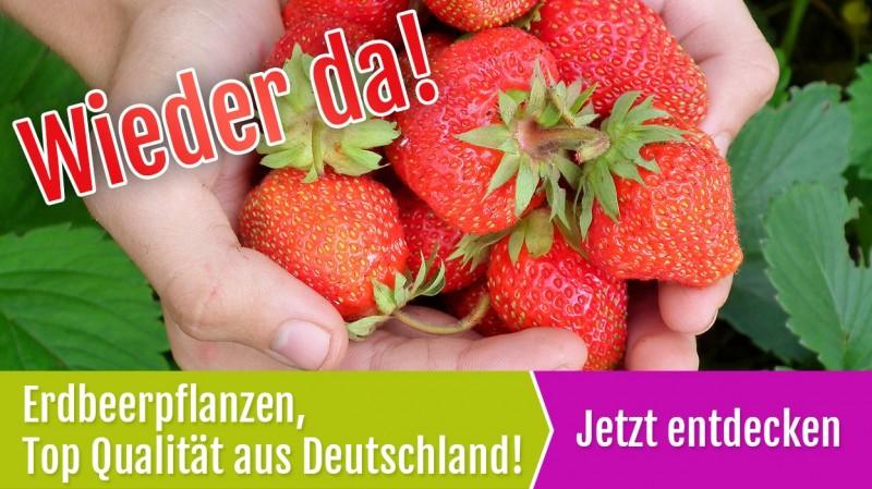 3629f02a50dc5f Grüner Garten Shop