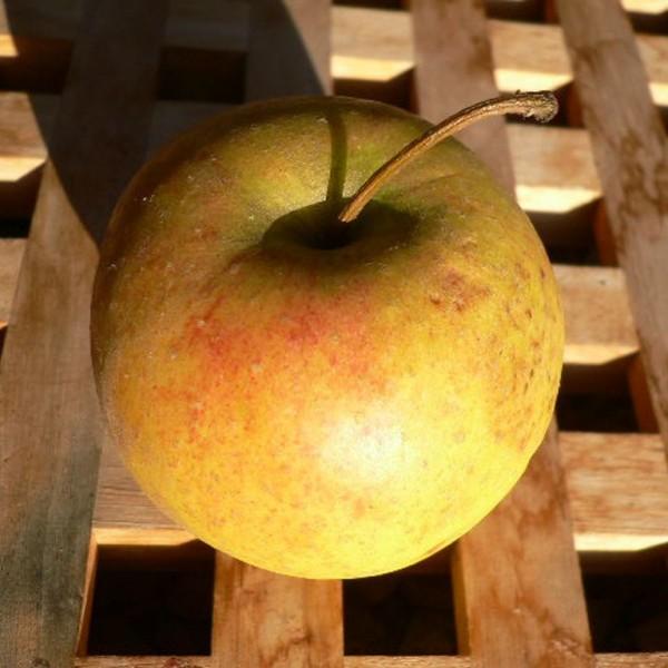 Rubinette ® Herbstapfel