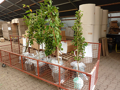 Unser Pflanzenversand Grüner Garten Shop